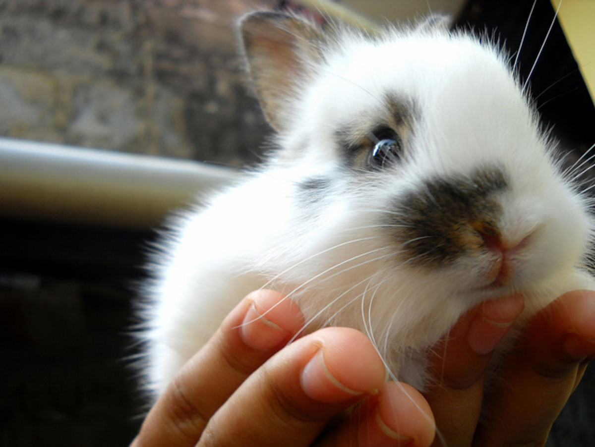 Facts and Photos of Cute Bunnies