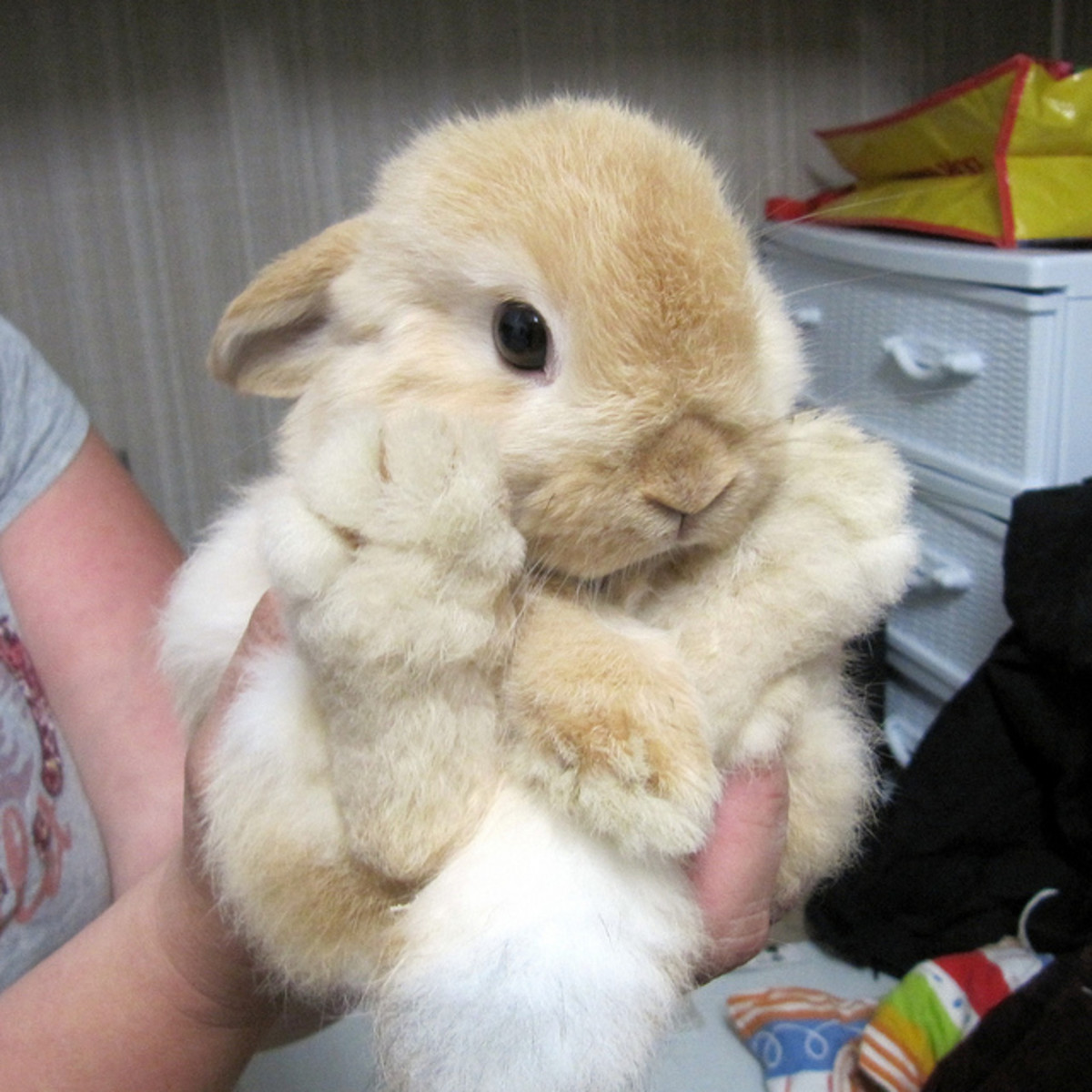 cute-bunnies