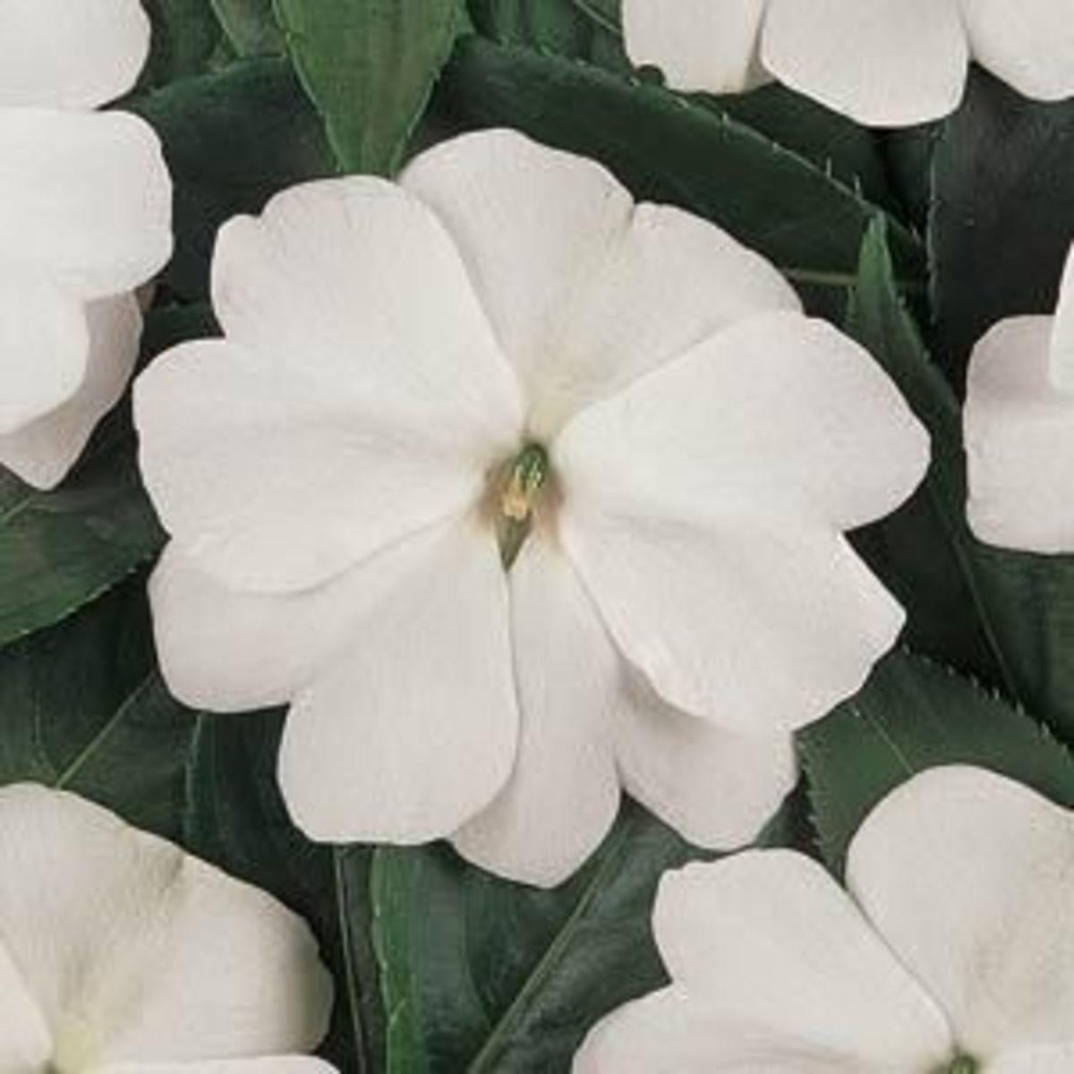 plantaneveninggarden