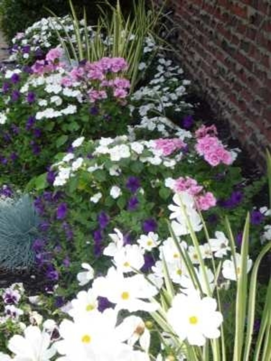 This is one of my moonlight gardens, I have placed a few solar lights to enchase the moonlight... I have used loads of white Cosmos, and white  impatient's along with white Alyssum, just for the sweet scent...