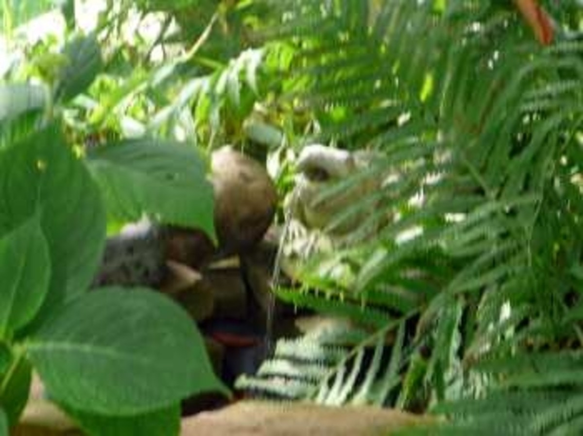 Had to show you my spitting frog... He provides just enough soft water sounds to make the garden magical... I have a few twinkle lights hidden among the fern, just to shed a bit of light on him.