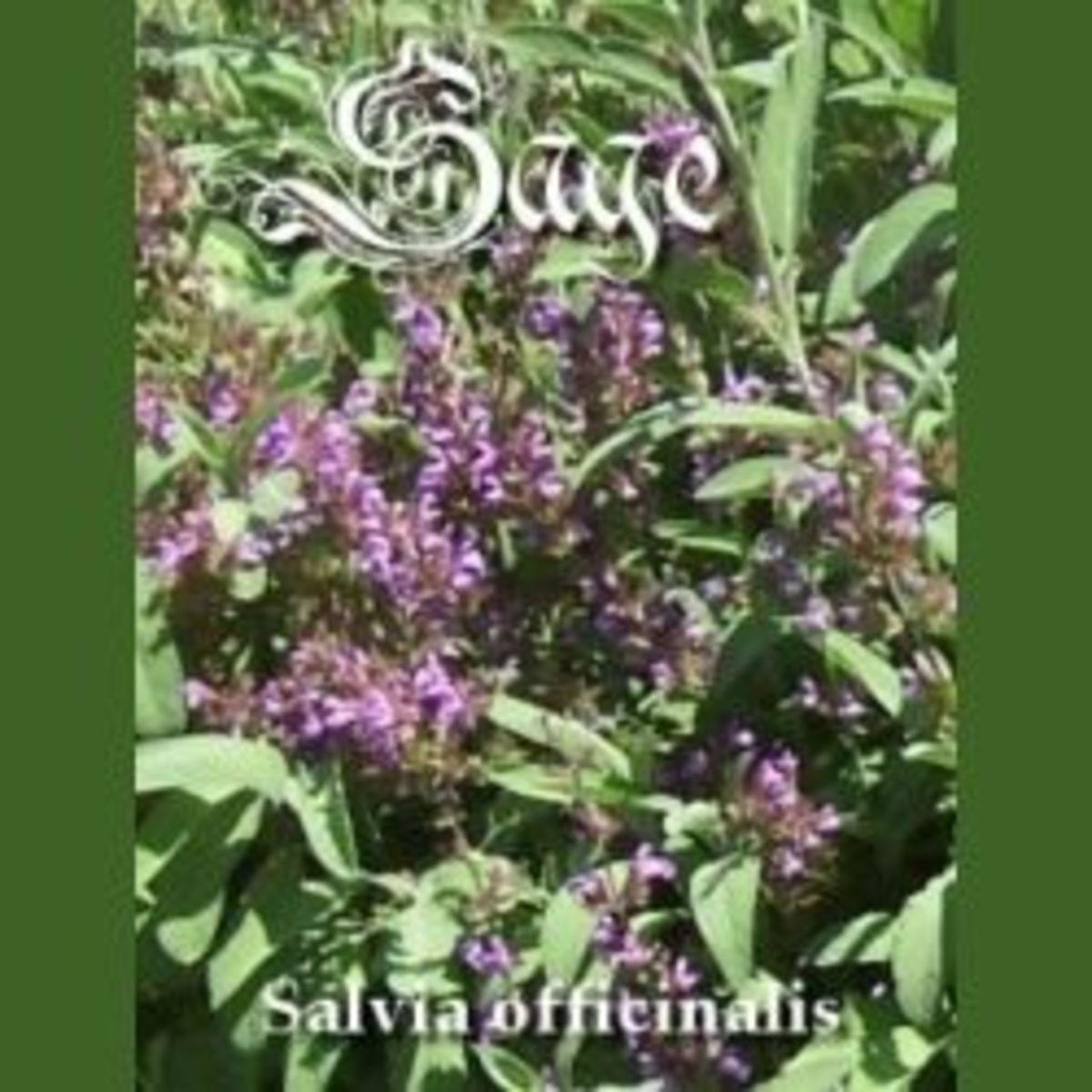 sage-herb-2