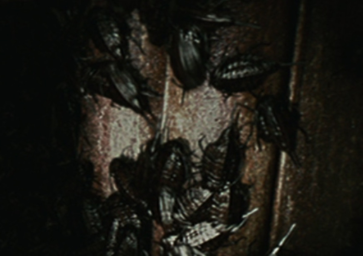 Cockroaches from the film