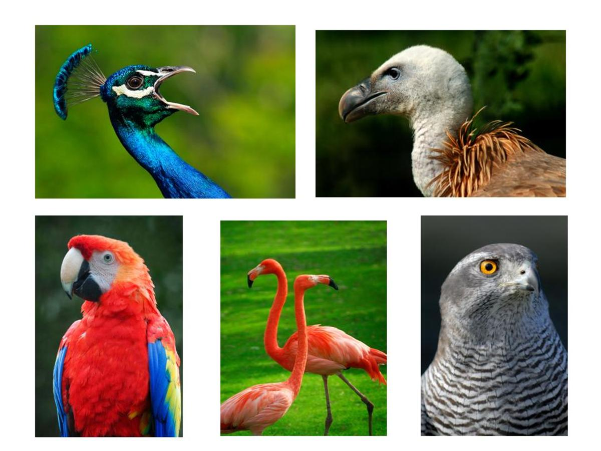 Ornithology is the scientific study of birds.