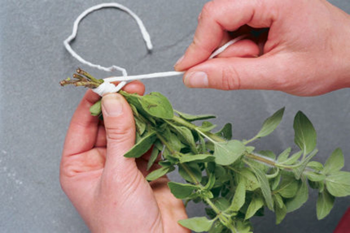 Tie the bundles of herbs (oregano here)with cotton string. Make a small bundle so drying is faster