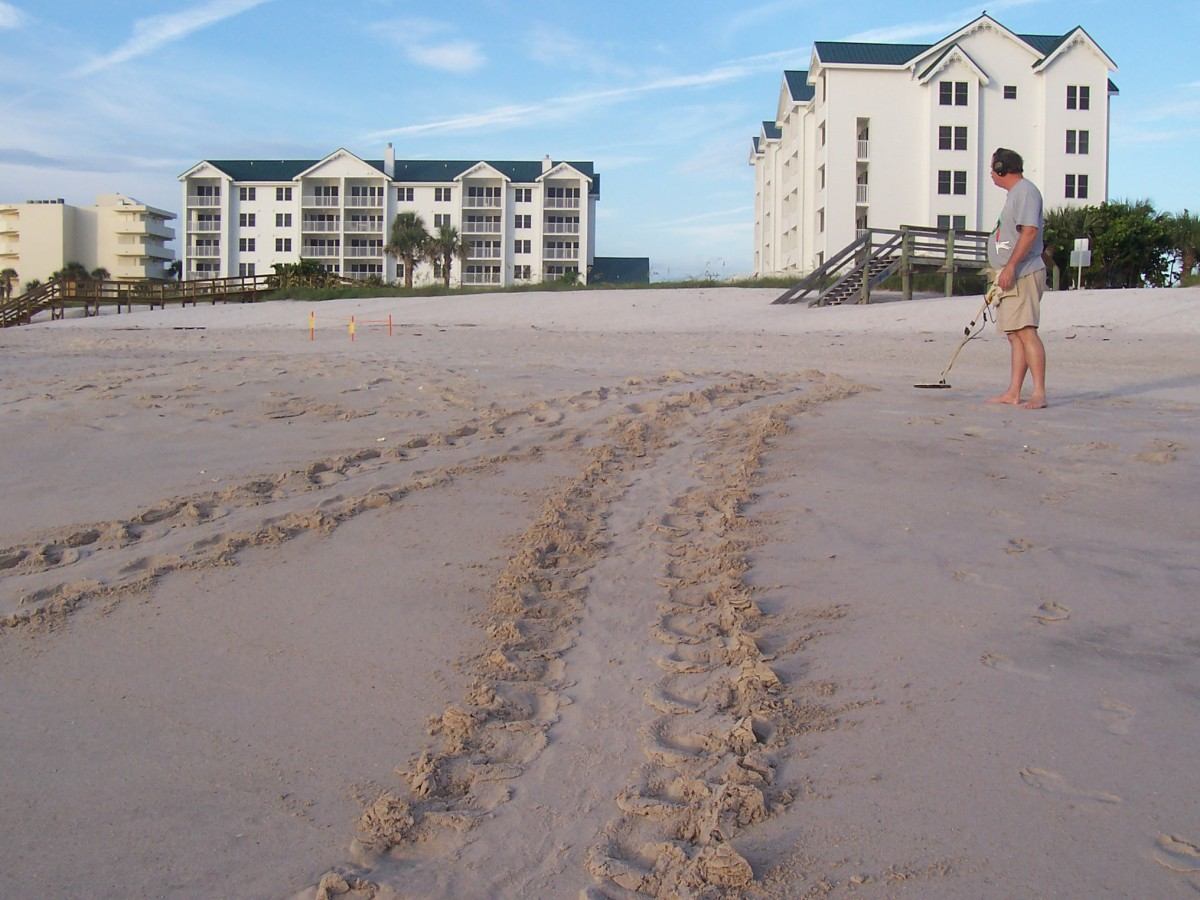 Turtle tracks with this metal detector dude!