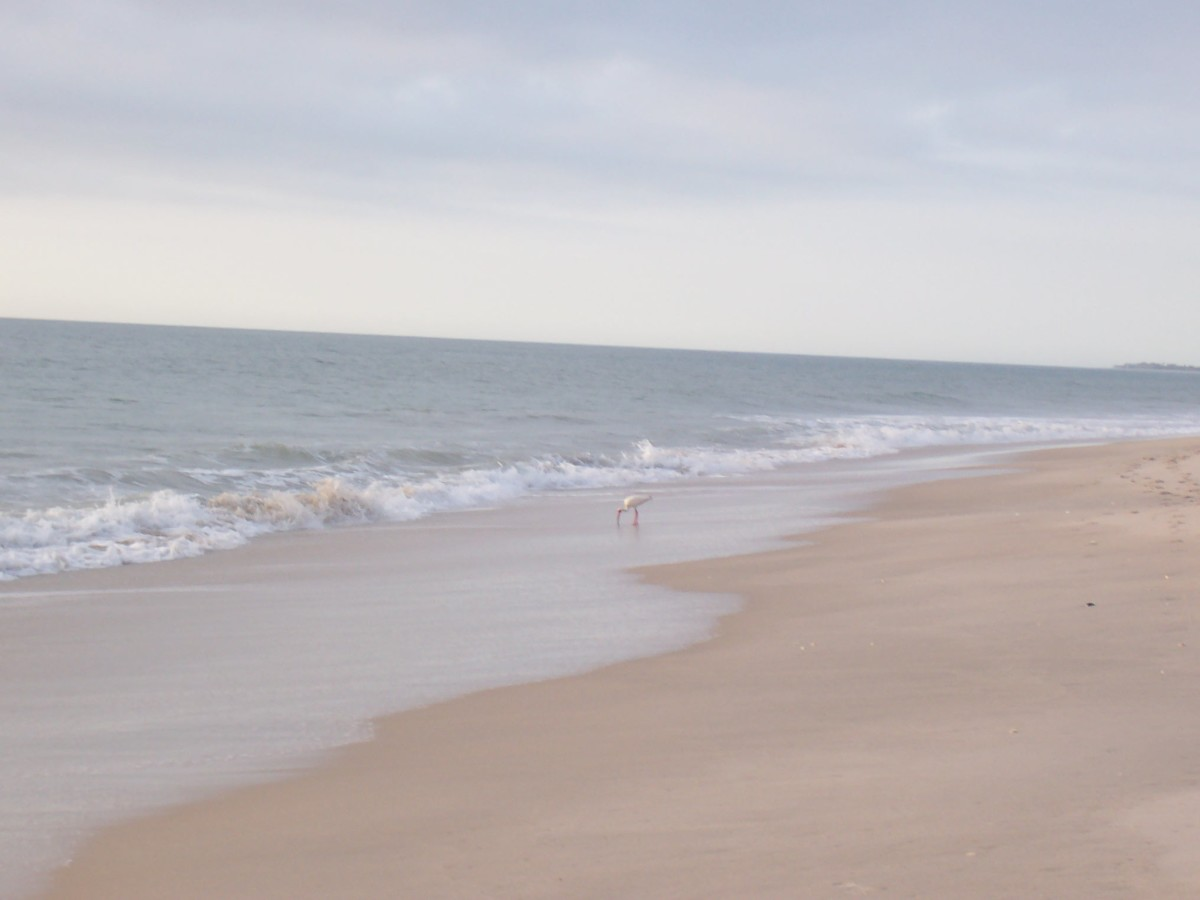 The daughters out there somewhere. One deserted beach!