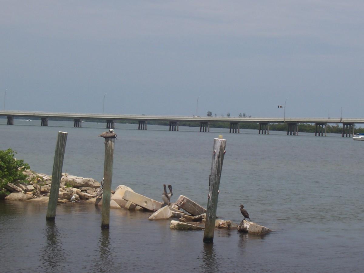 Pelicans and cormorants