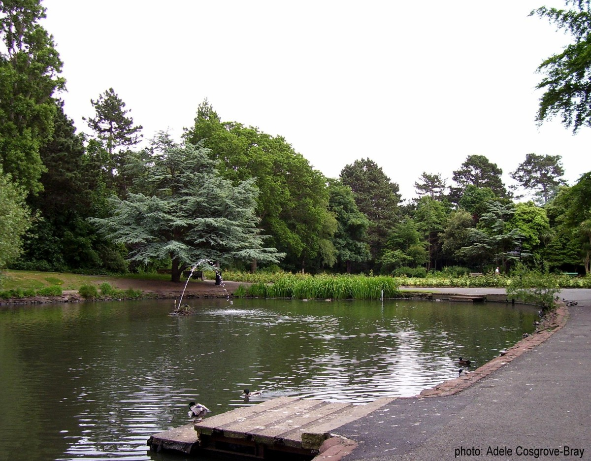 Ashton Park's pond provides a home for many varieties of wildfowl.