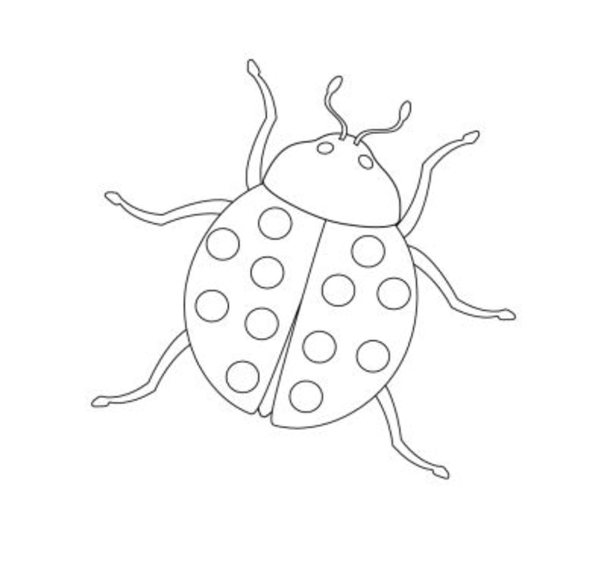 Lady Bug Insect Coloring Page