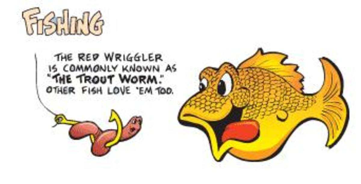 Fishing with Red Wiggler Worms