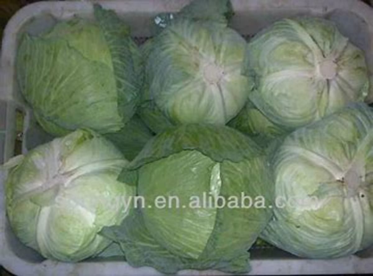 cabbage heads ready to freeze