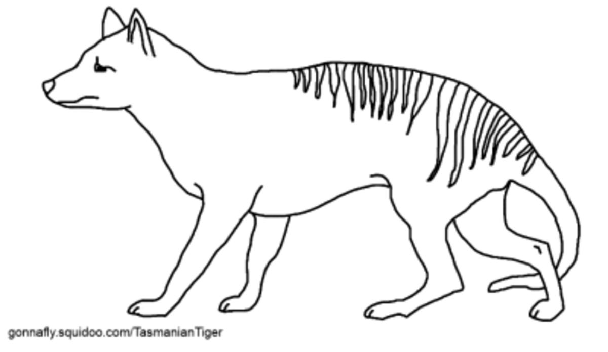 Tasmanian Tiger Coloring Page