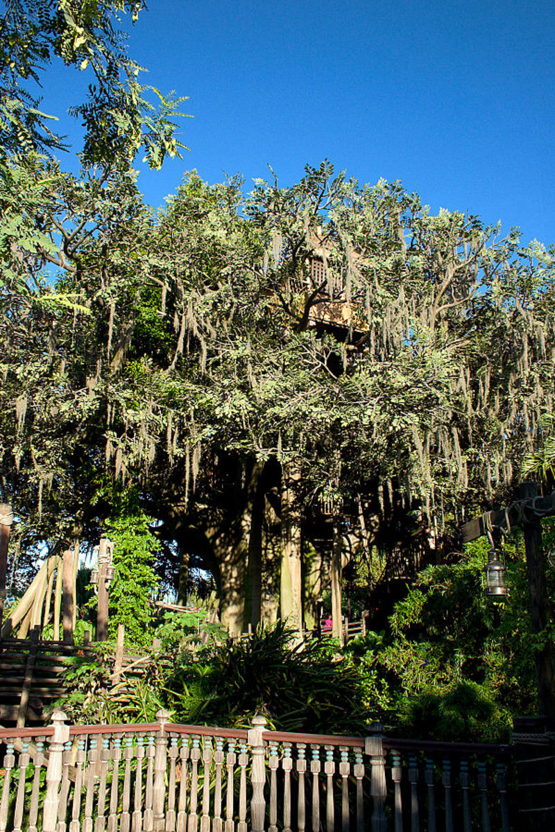 Swiss Family Robinson Treehouse in Adventure Land