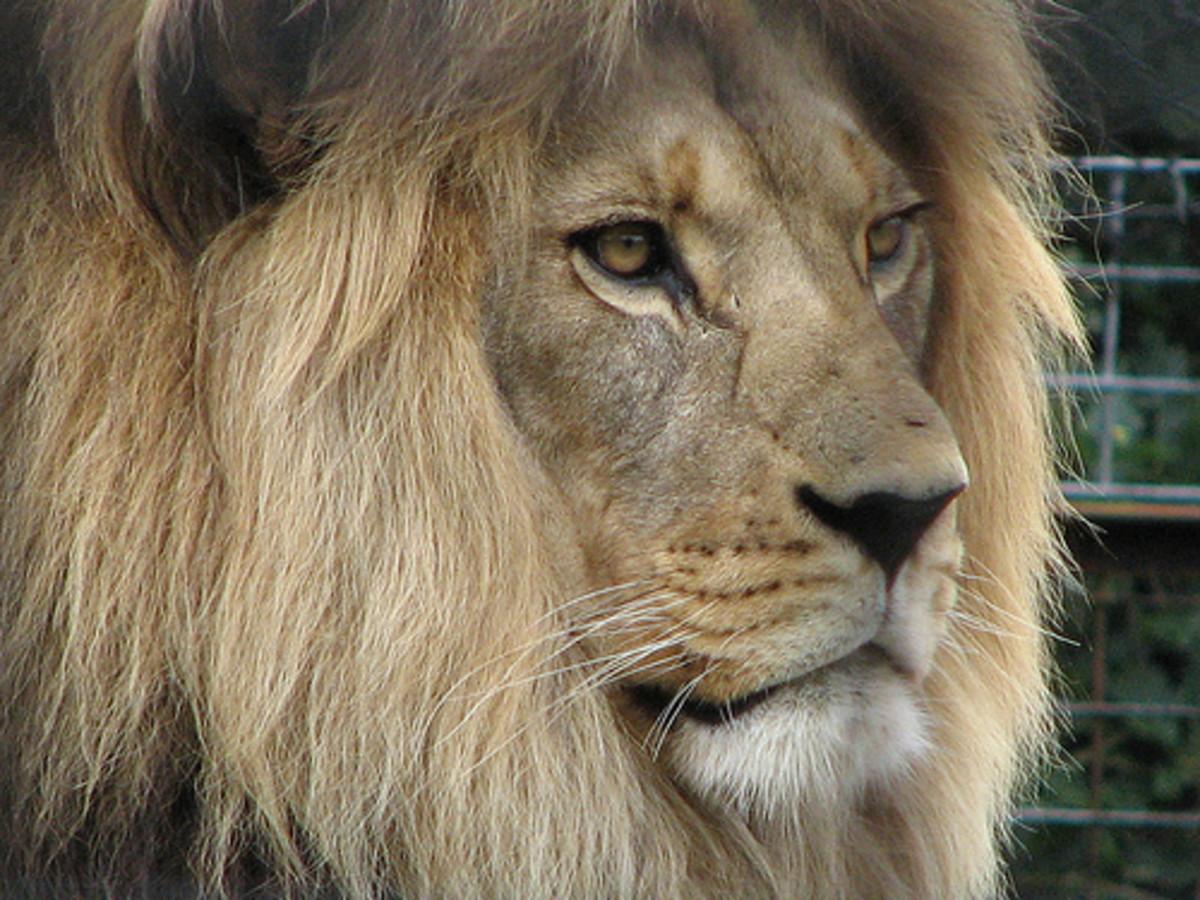 Photo By: http://www.flickr.com/photos/growlroar/