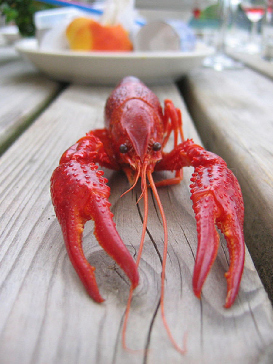 What to Serve With Lobster