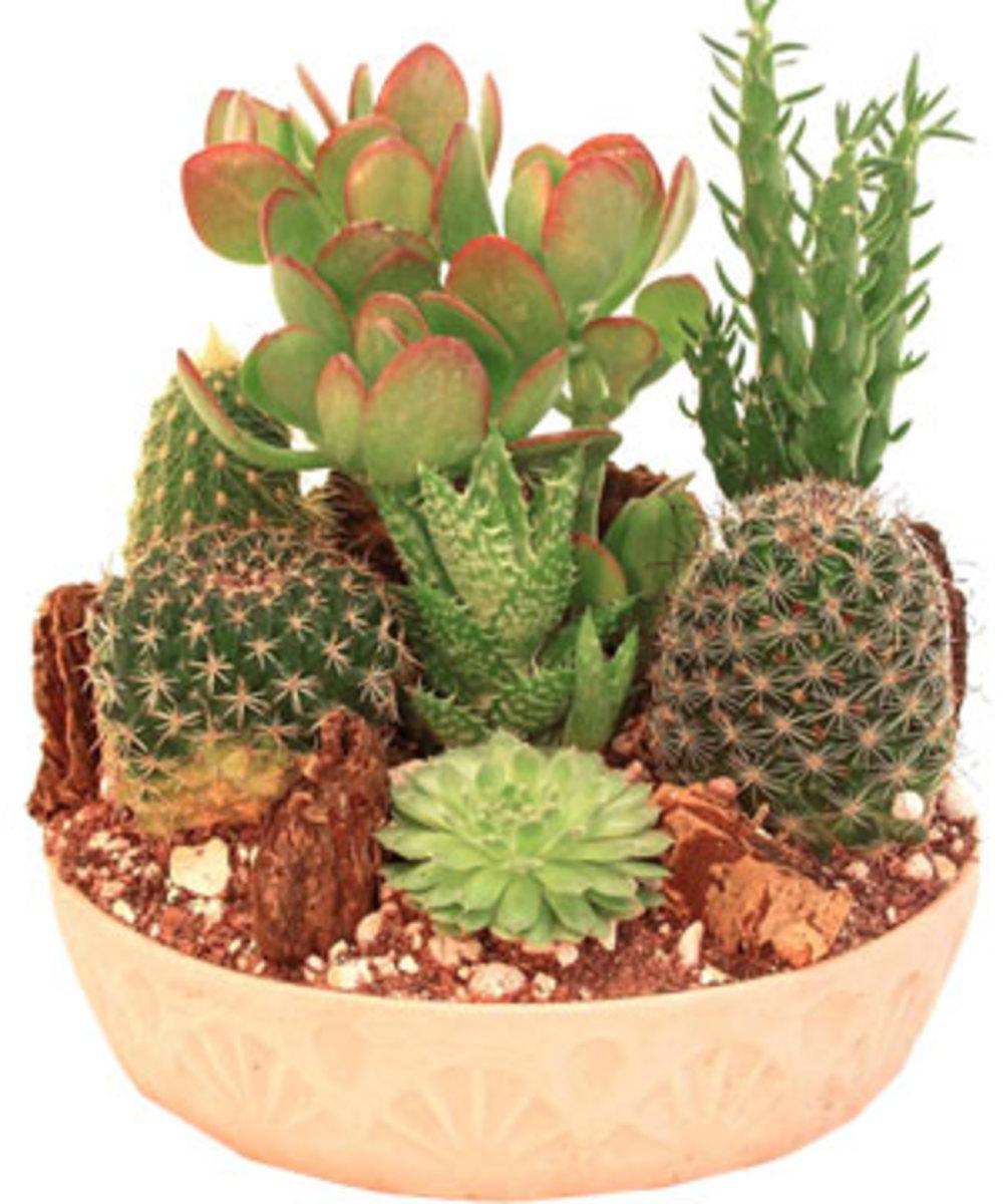 How To Make A Cactus Garden - small cactus garden design