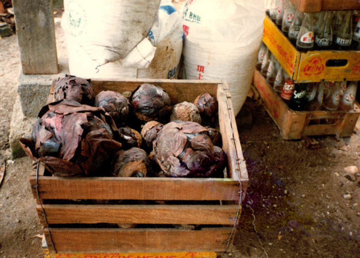 It shows a box full of Rafflesia (probably R. cantleyi) buds that are sold in markets for various medicinal purposes.  This practice severely impacts local Rafflesia populations where reproduction is often limited.