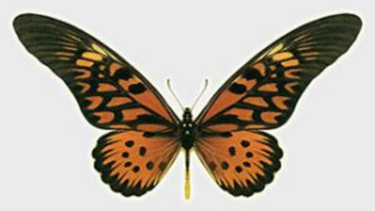 This particular butterfly is in the family Papilionidae