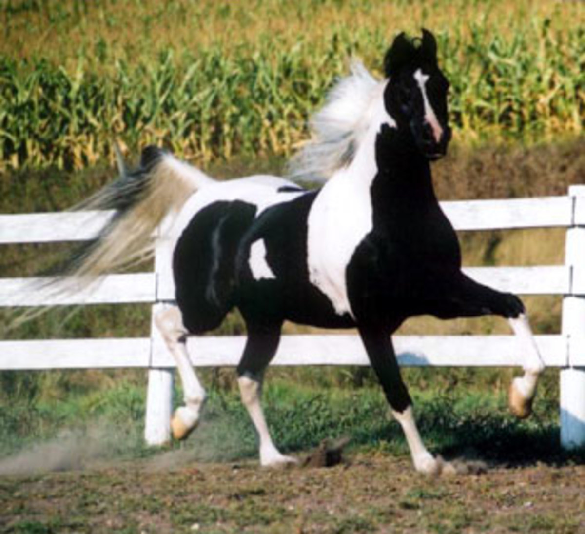 Different Types Of Horses Hubpages