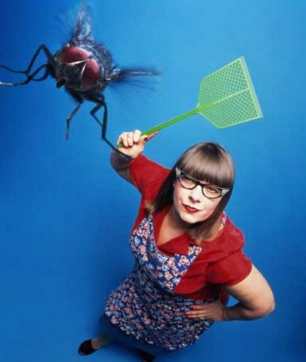 Image Result For Killing Mosquitoes Indoors