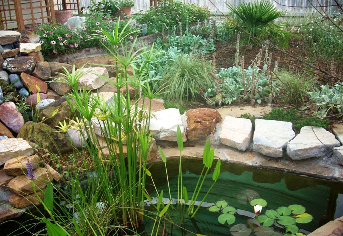 The Small Pond:  How a Small Garden Pond Can Be a Great Choice