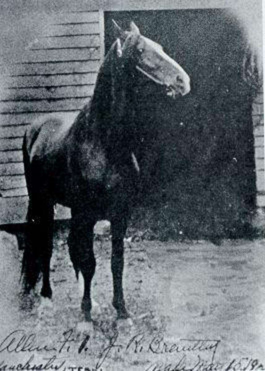History of the Tennessee Walking Horse