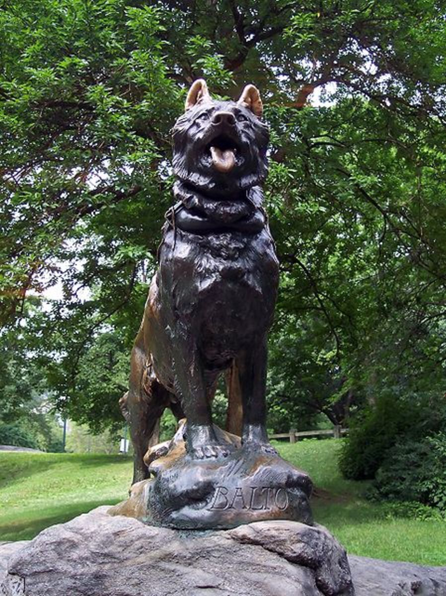 Balto's statue in Central Park, New York City.