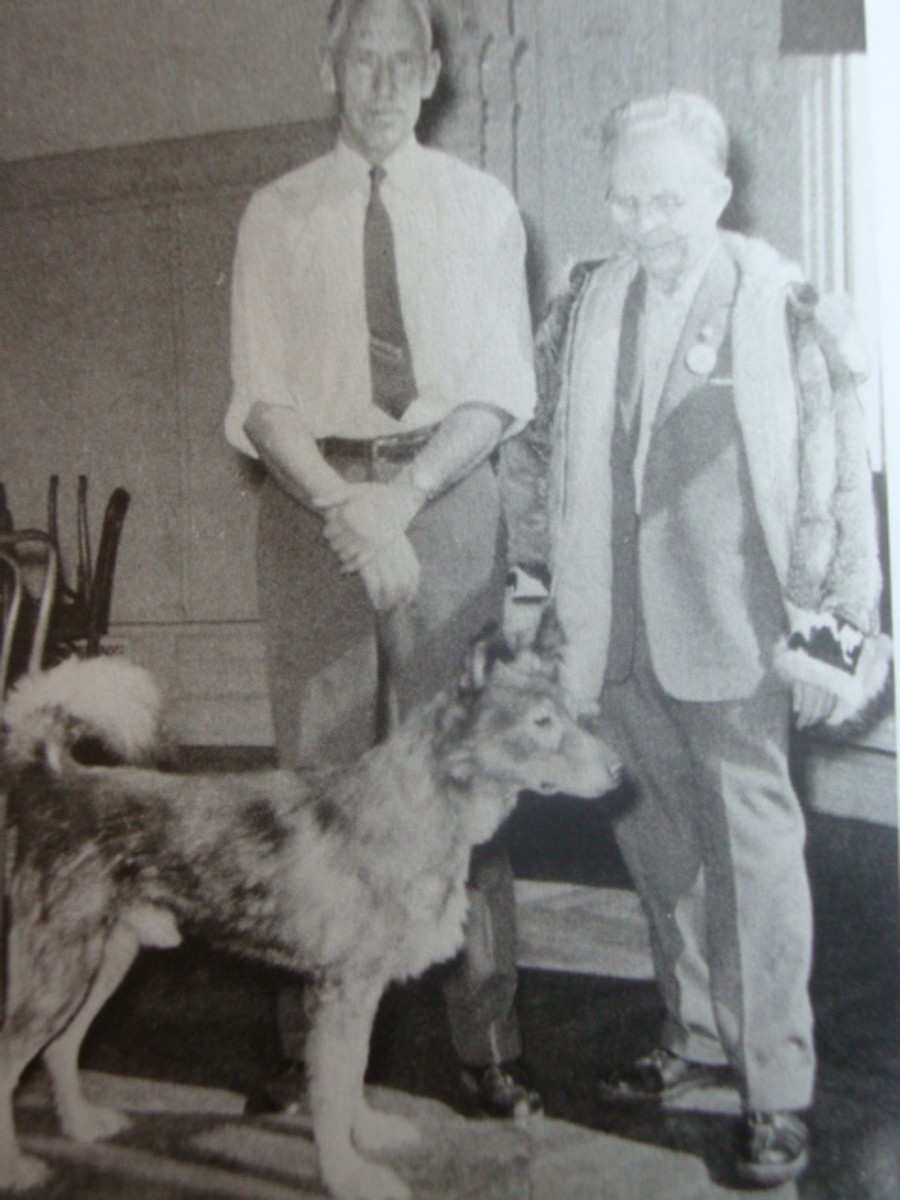 Leonhard Seppala visiting Togo at the Peabody Museum 31 years after his death. Morrill is also photographed.