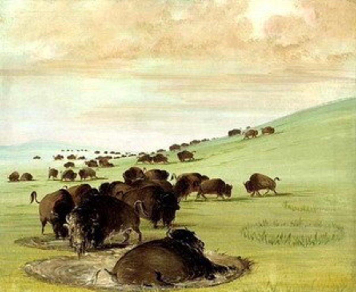 Buffalo wallowing to make themselves more comfortable.   Courtesy of: http://www.thailandoutdoor.com/GunStory/2continents/PacificRim/BuffaloWallow-1.jpg