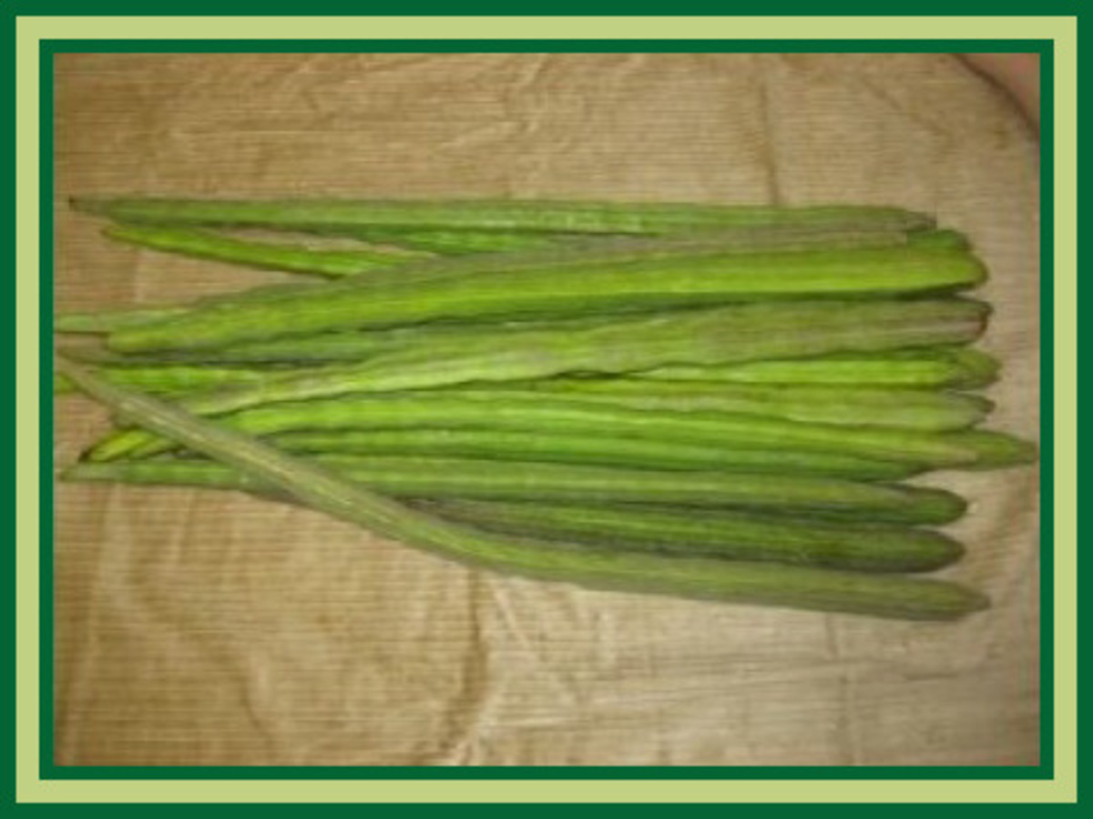 """Pods from our Moringa Oleifera trees - see why they are called """"drumsticks""""?"""