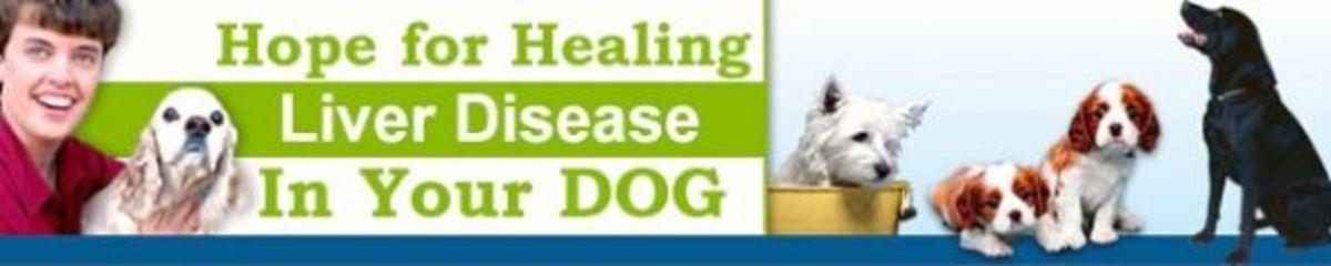 Hope For Healing Liver Dog Liver Disease