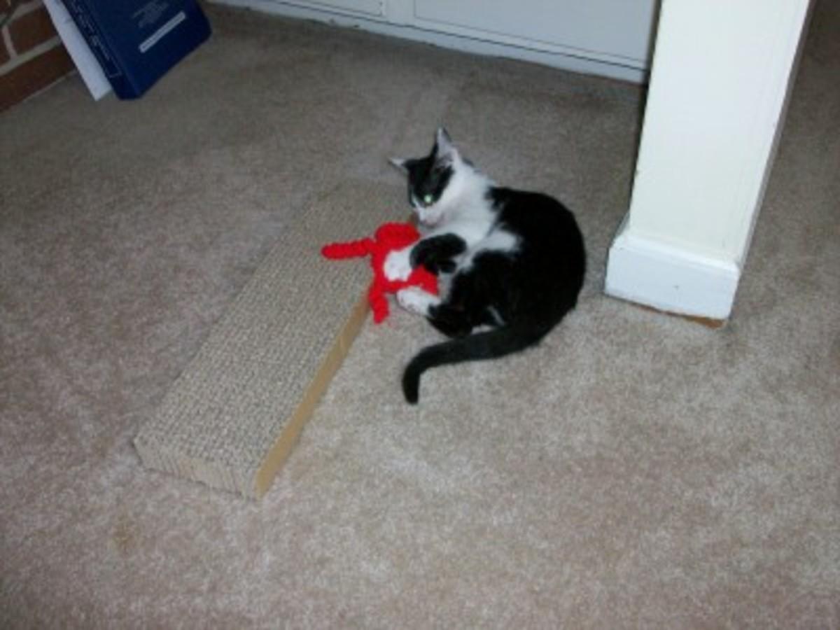 Kitten with toy yarn octopus