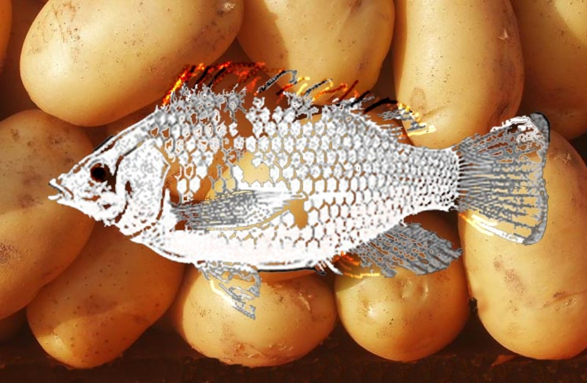 Luos are known to like fish while Kikuyus are said to love potatoes