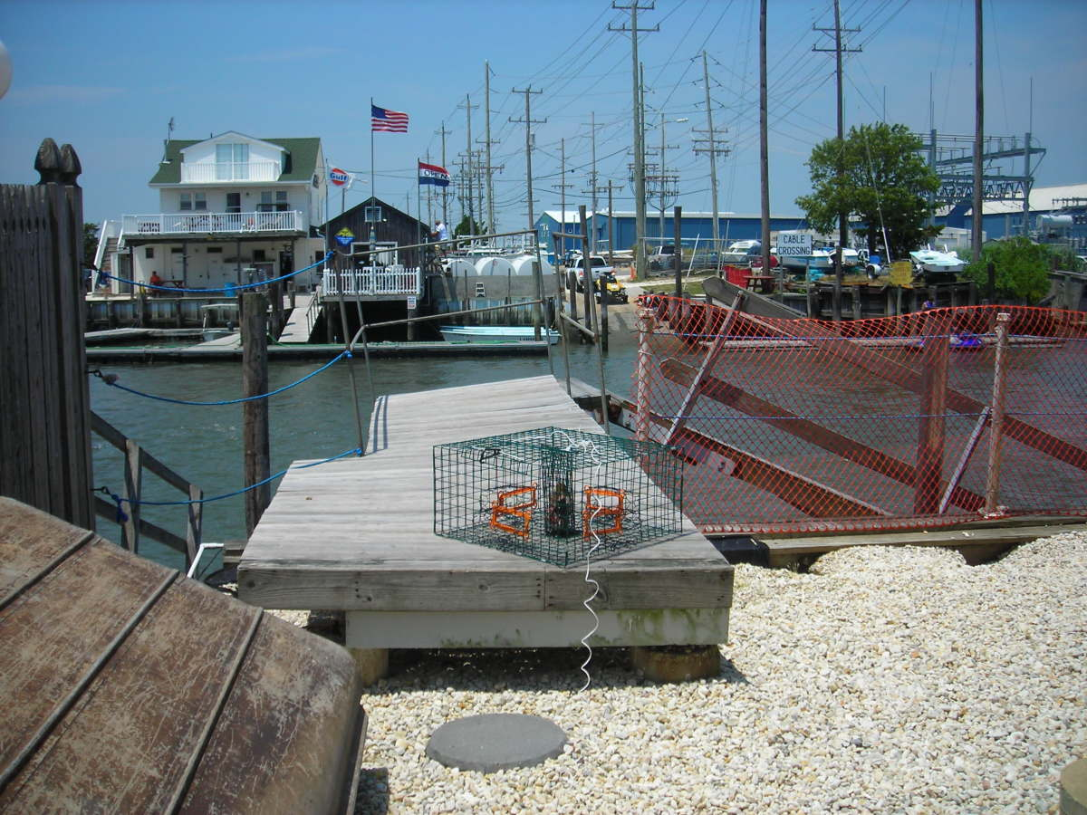 how-to-get-a-crabbing-license-for-crab-pots-in-new-jersey