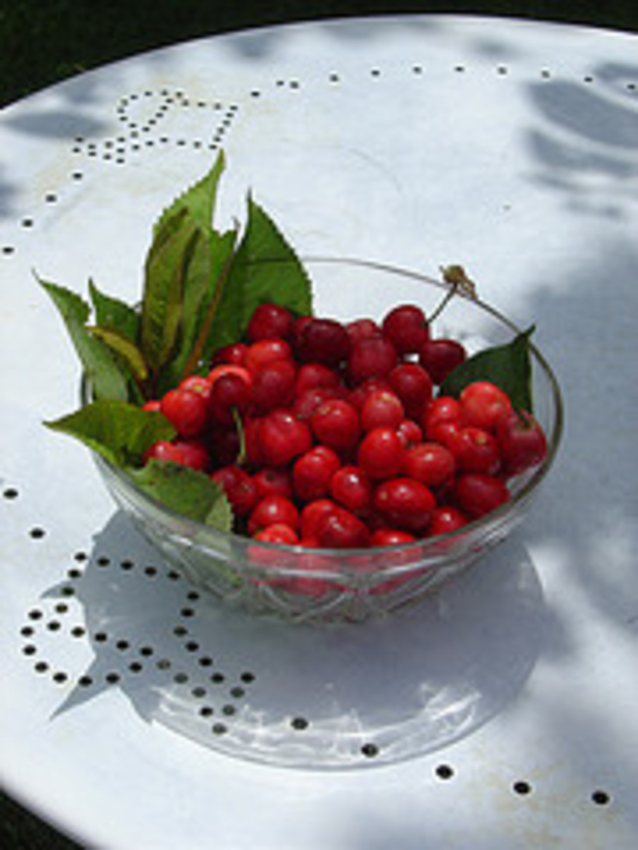Life is just a bowl of cherries!