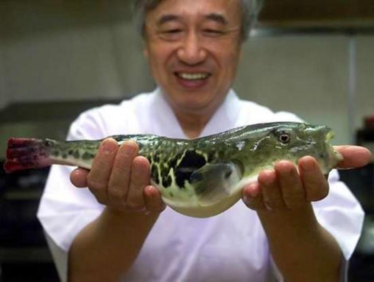 WANNA EAT FUGU? (Photo courtesy of http://kodiakak.files.com/)