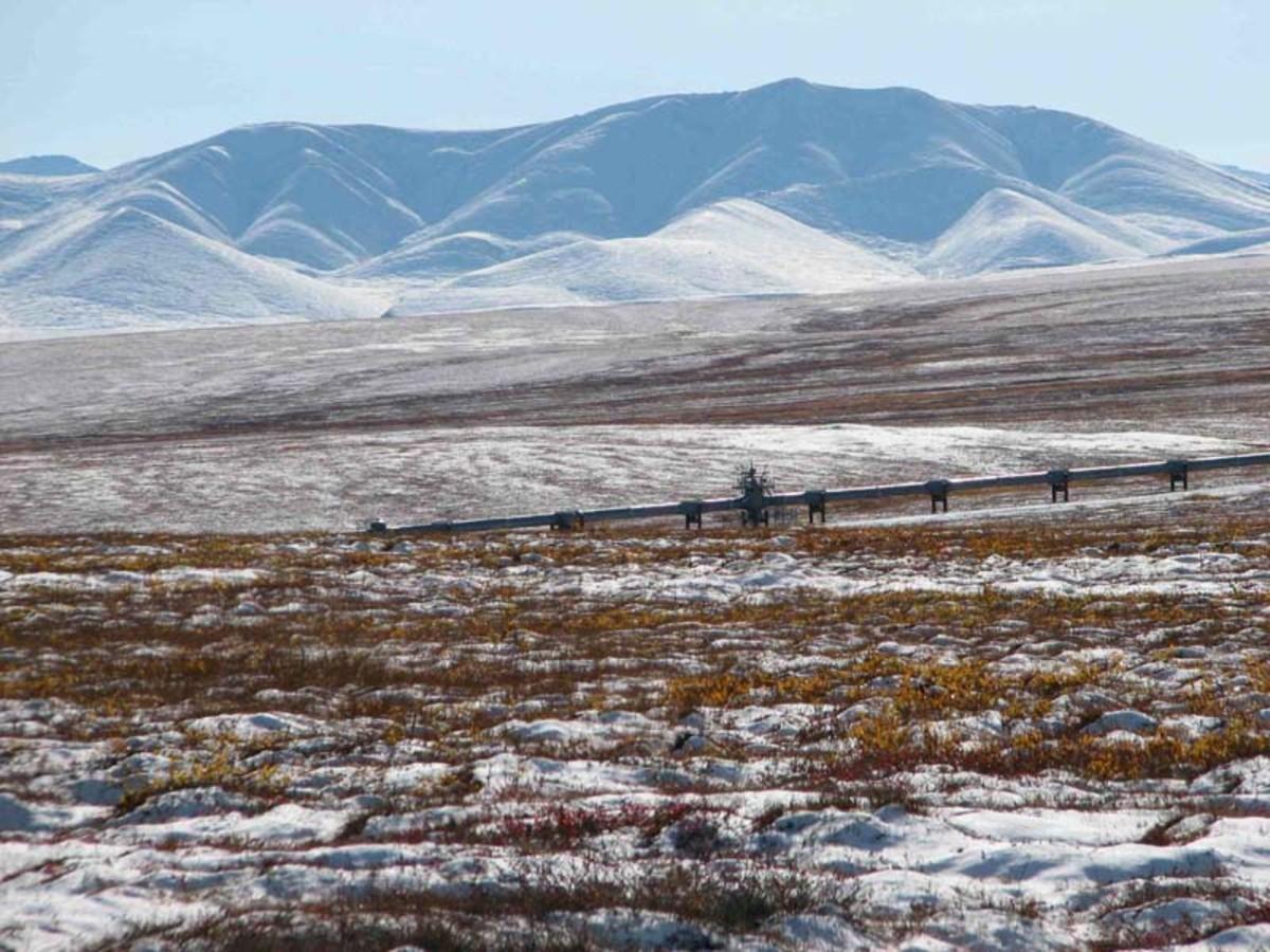 tundra ecosystem