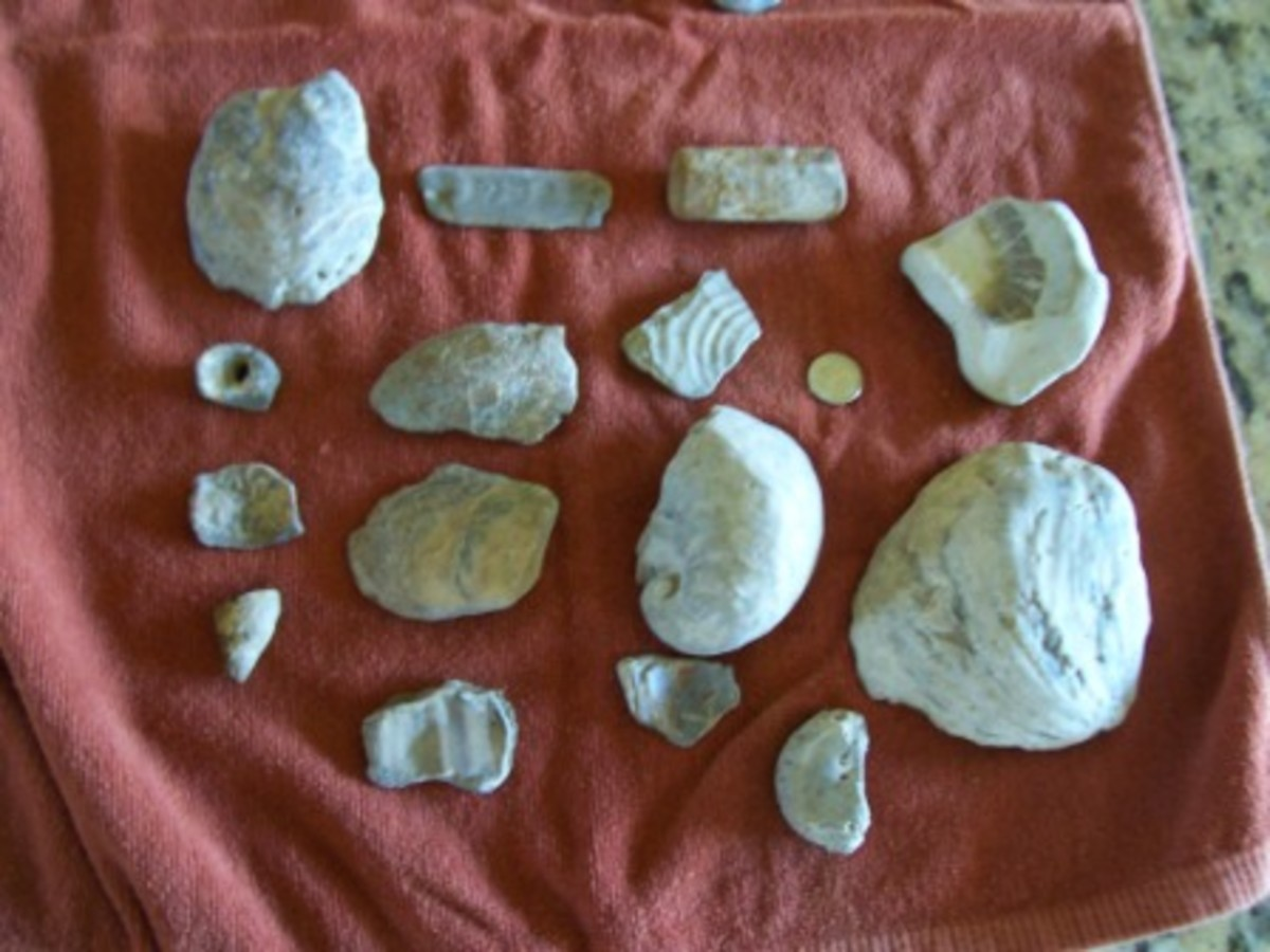 Shells and such. The vertabrae is lower right below the large shell.