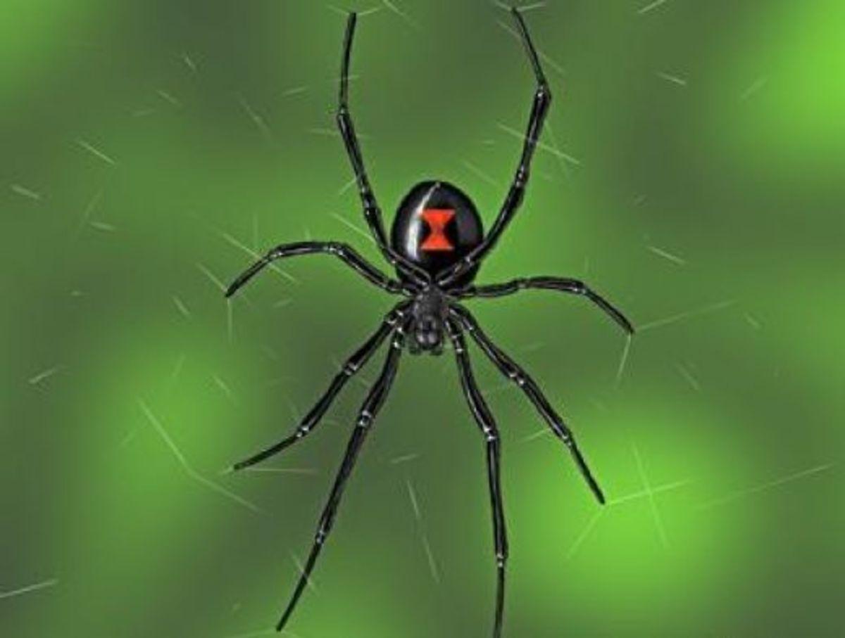 the-poisonous-black-widow-spider