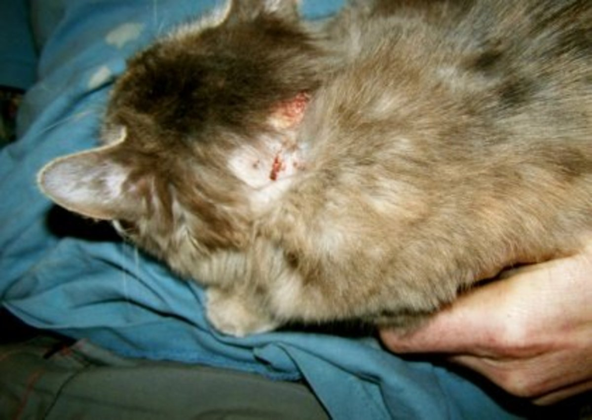 first-shield-flea-medication-for-cats-dogs-is-poison