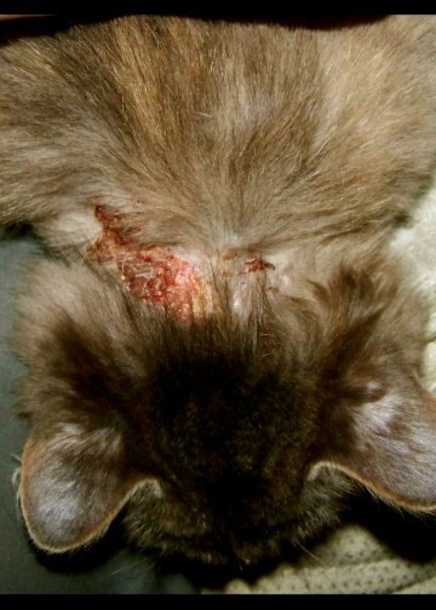 Because cats cover their feces, their claws are exposed to harmful microorganisms.