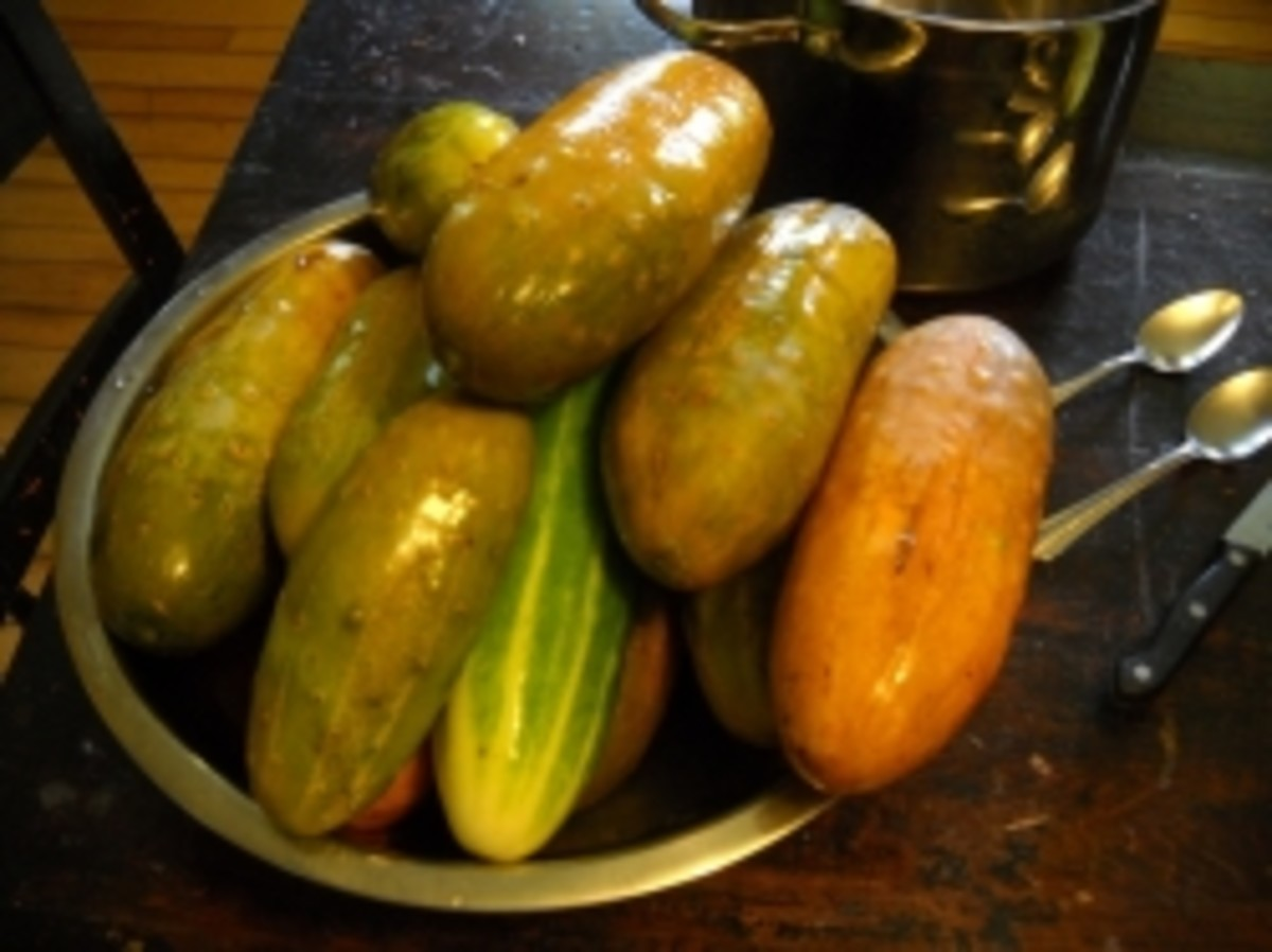Ripe Cucumbers for Making Tongue Pickles