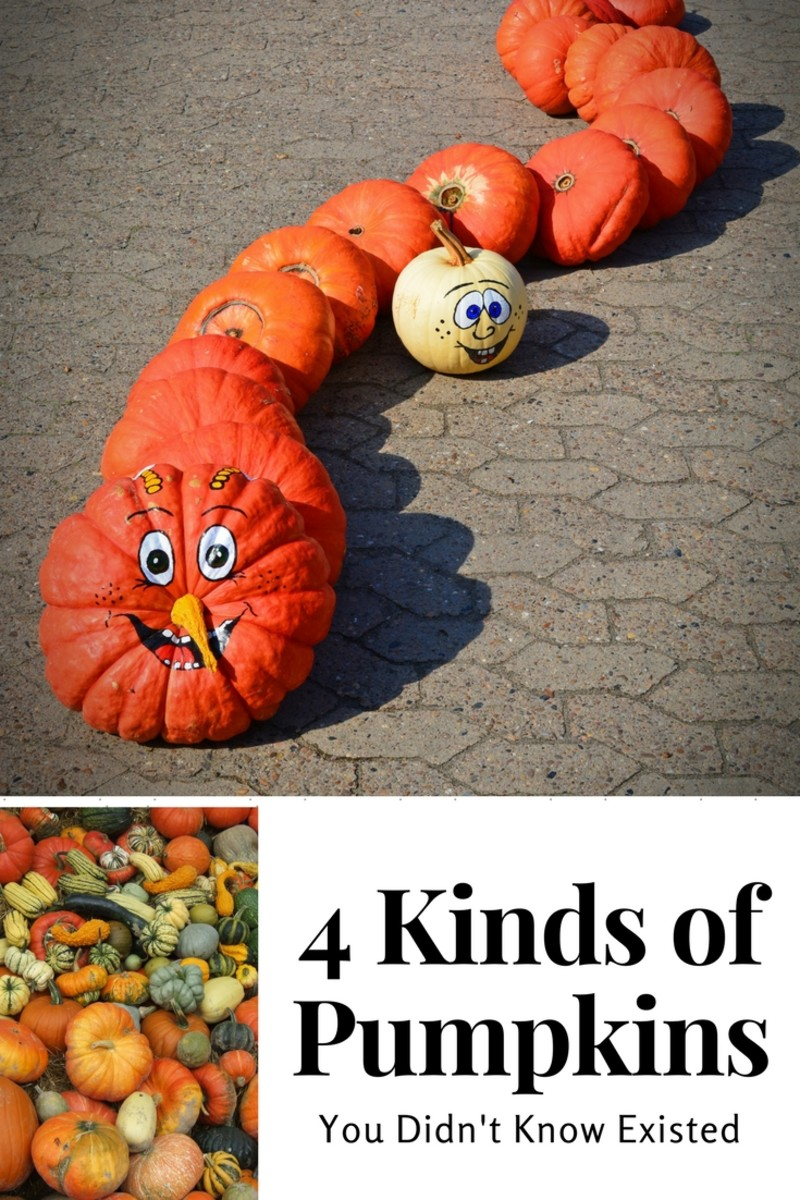 4 Kinds of Pumpkins You Didn't Know Existed