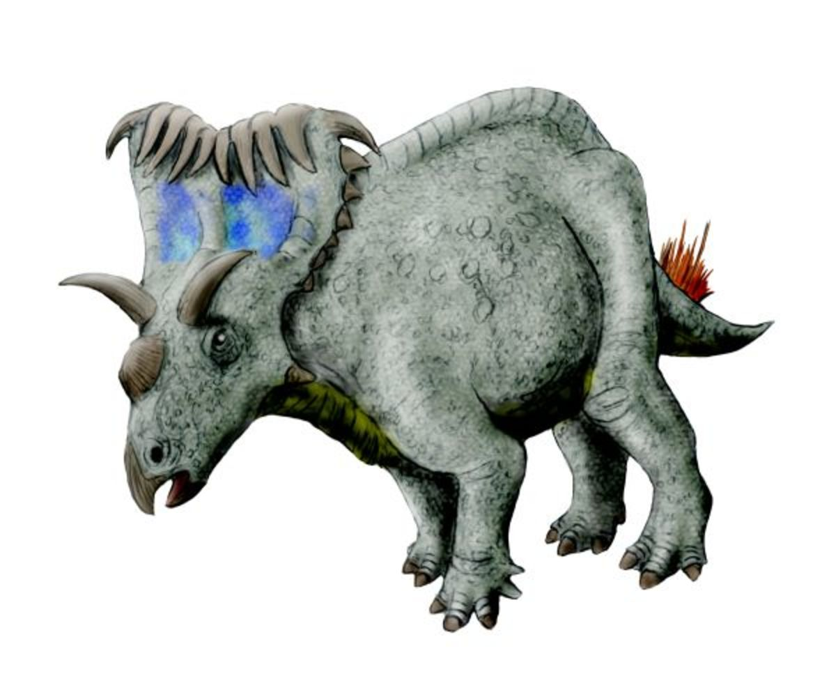This is what the Kosmoceratops most likely looked like.