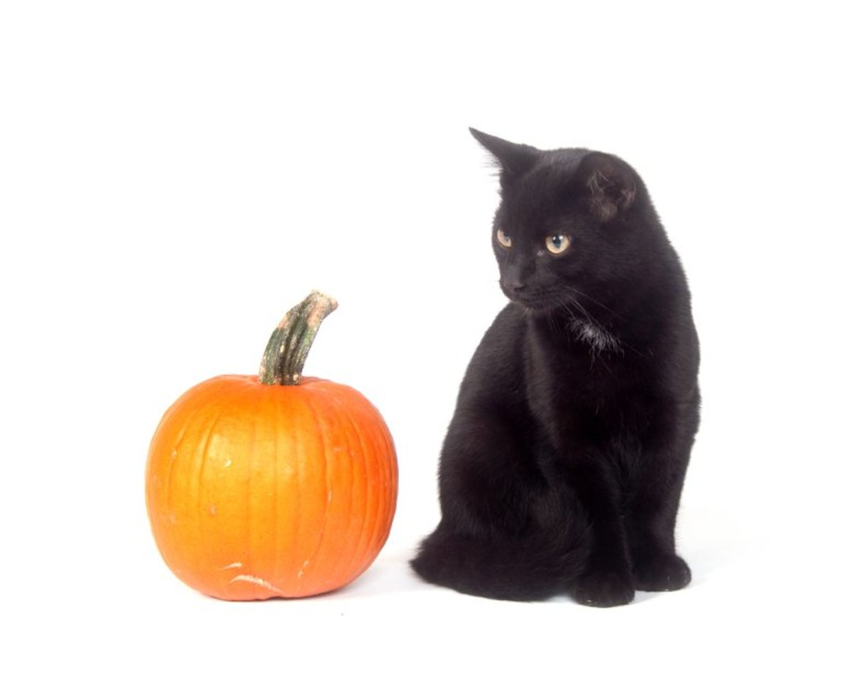 a Halloween pumpkin and a Black Cat