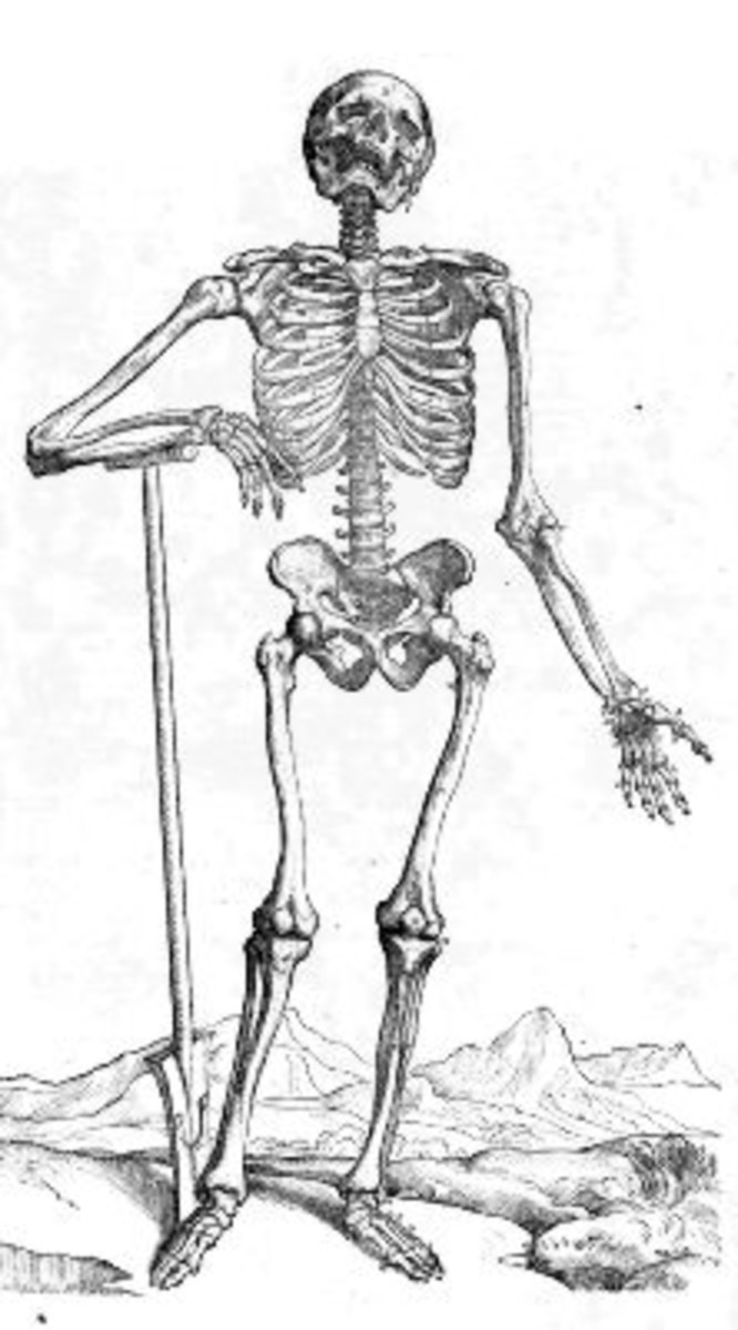 Skeleton Image from De humani corporis fabrica Page 163