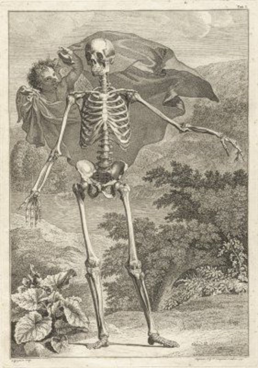 Skeleton Illustration Table 1 from Tabulae sceleti et musculorum corporis humani