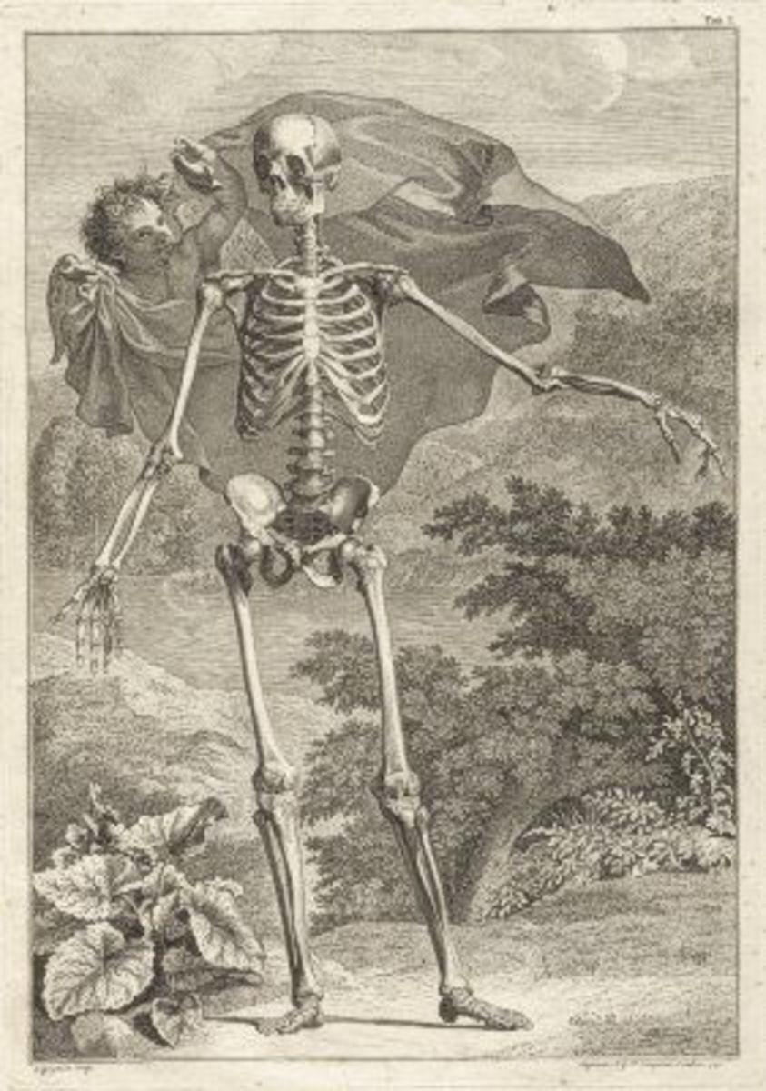 Skeleton Illustration Table 1 from Tabulae sceleti et musculorum corporis humani