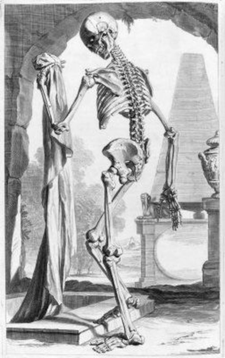 Skeleton Illustration Table 88 from Ontleding des menschlyken lichaams